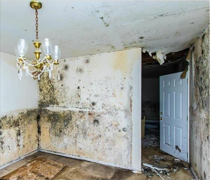 Mold Remediation Does Your Ascension Home Have a Mold Problem?